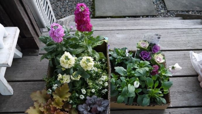 新しい花壇