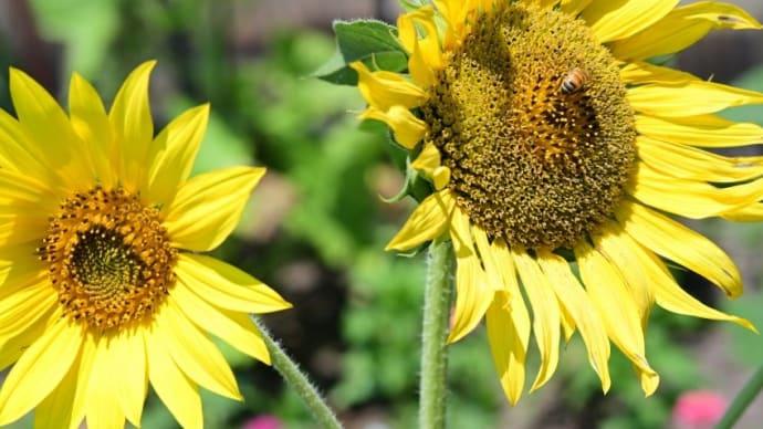 自宅に咲く草花達 2021大暑