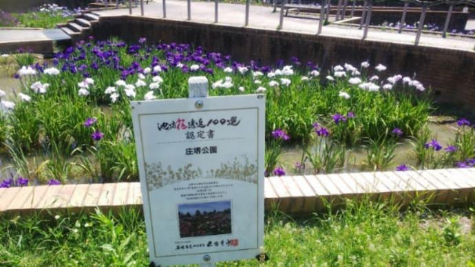 「庄堺公園(彦根市)」ハナショウブとバラとマダニ