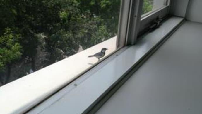 小鳥の騒音