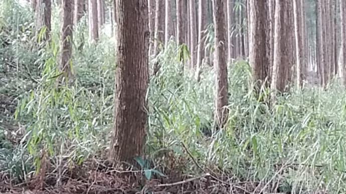 松本たかし/春草や光りふくるる鳩の胸
