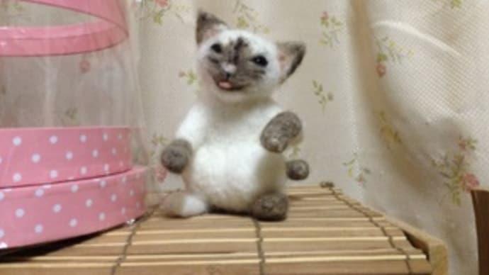 猫に笑われる^^