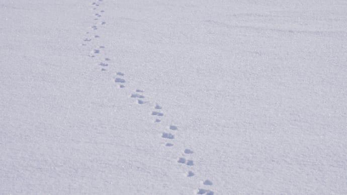 雪に残る足跡