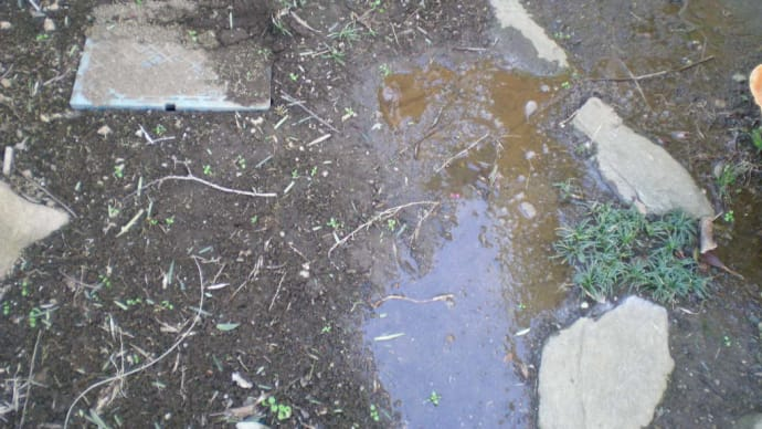 木の根で漏水・・・千葉市