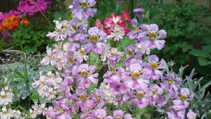 散歩道の花たちから、良い香りがしてきました。