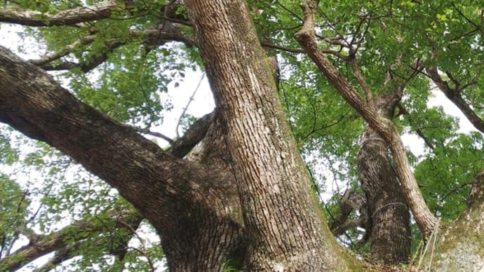 初詣は徳島県鳴門の大麻比古神社