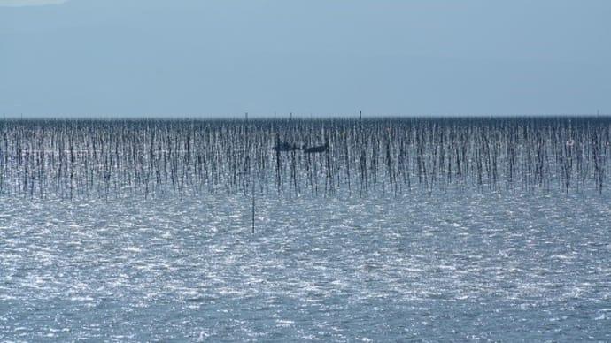整然と並ぶコンポーズ(海苔支柱)