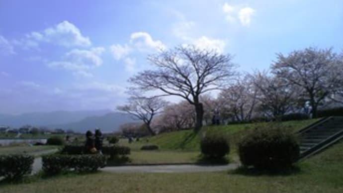 最後の桜と橋本八幡宮