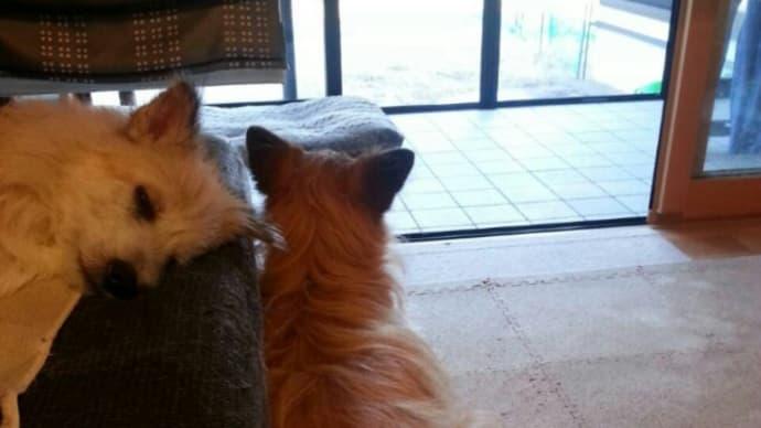外を見るユノ。隣にティアラ