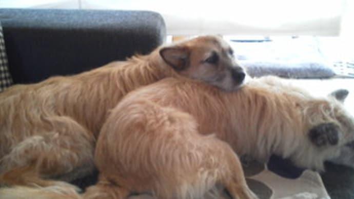 ティアラ&ユノとソファーで