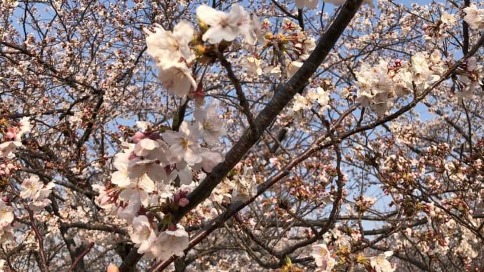水尾公園に咲く桜📷街角ぶらり旅