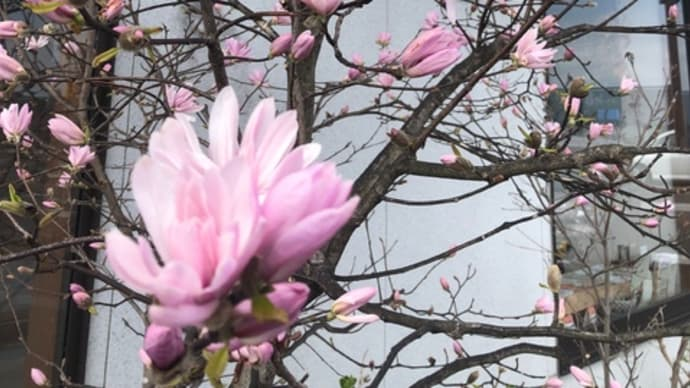 店頭の花が咲きました