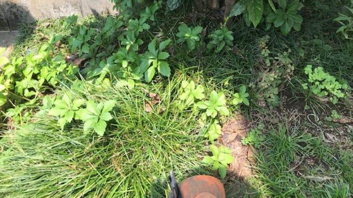 木の下で漏水修理・・・千葉市