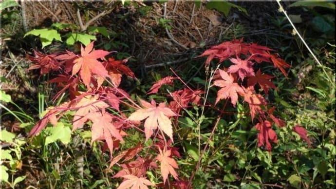 森の紅葉は・・・。