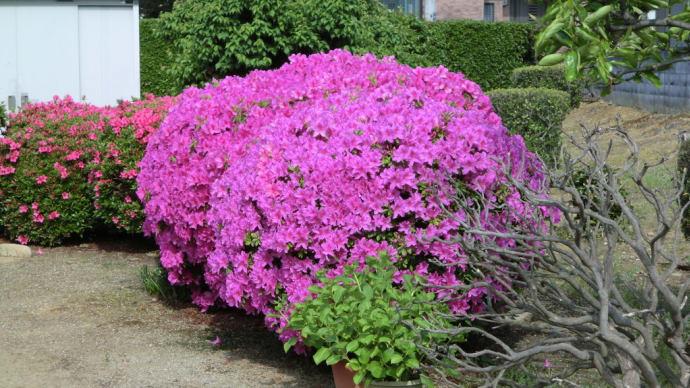 庭に咲く花📷街角ぶらり旅