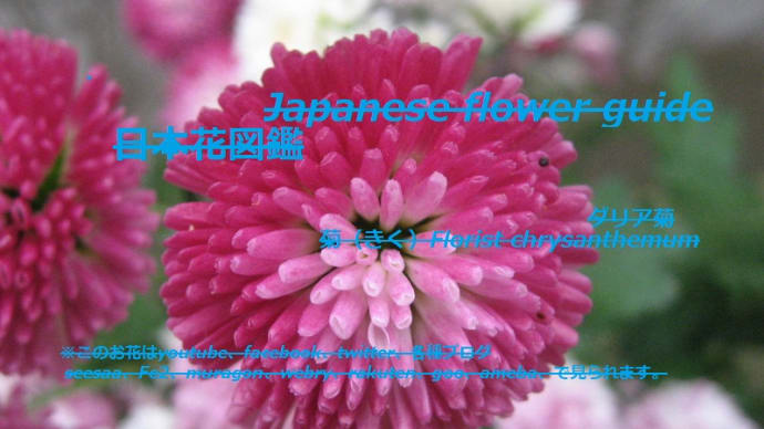 花びらは筒?!Petals are cylinders? !!