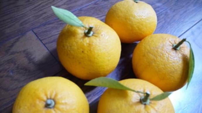 オレンジピールチョコ