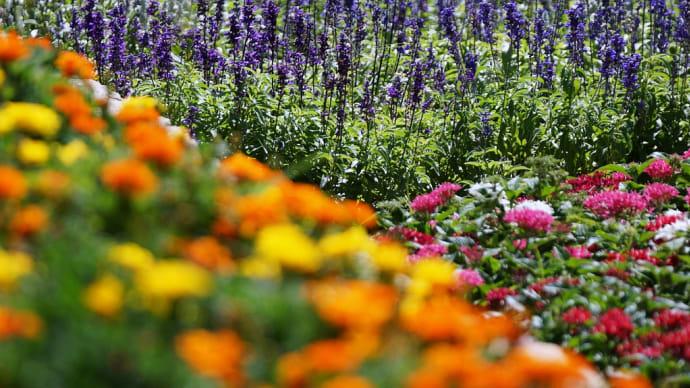 花壇 配色を楽しむ