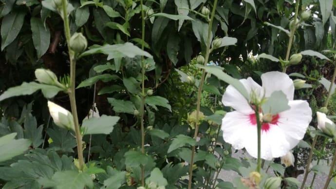 小暑(二十四節気)はジワジワと分離させていくとき 暦から考える人生