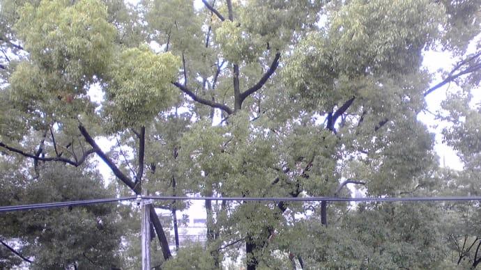 雨の日は…