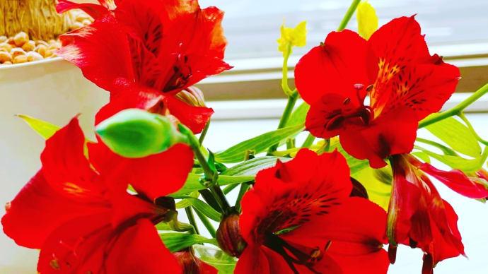 お花の手入れ