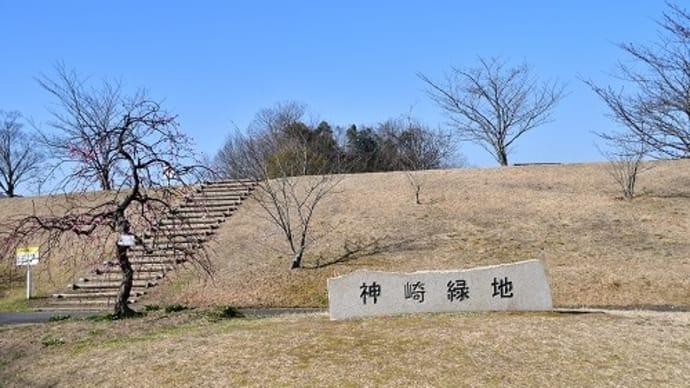 神崎緑地公園 梅 '21