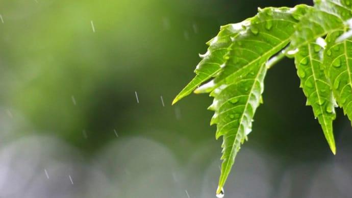 ✿ 雨の日 ✿