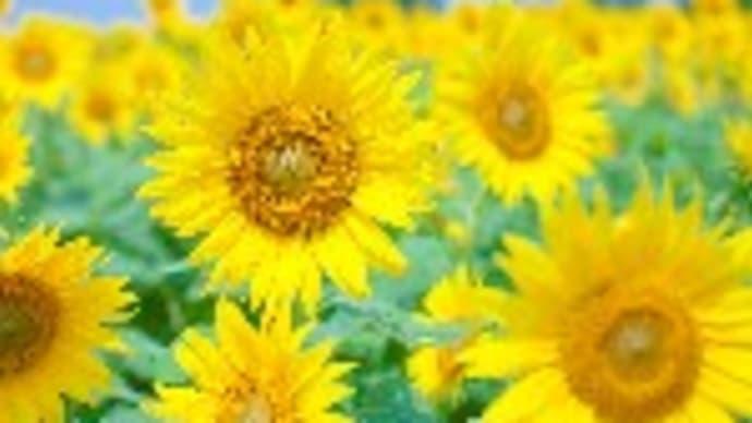 笑顔は幸福の花