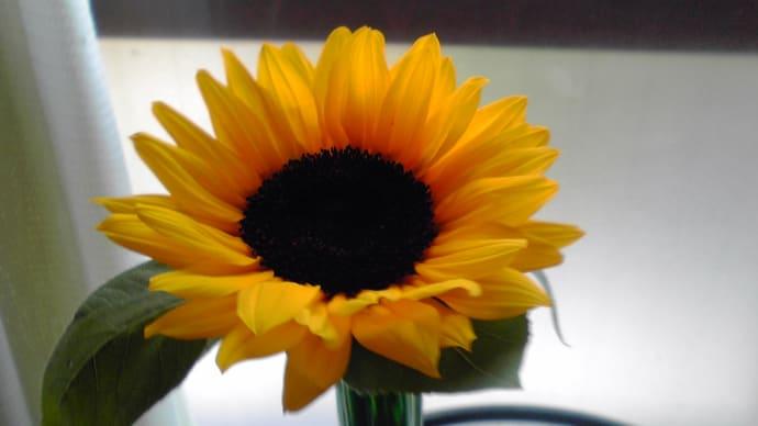 セミの鳴声と向日葵の花…