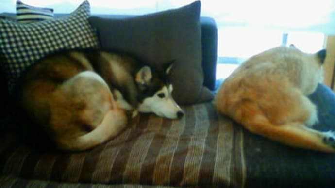 日曜の朝。ソファーの上。