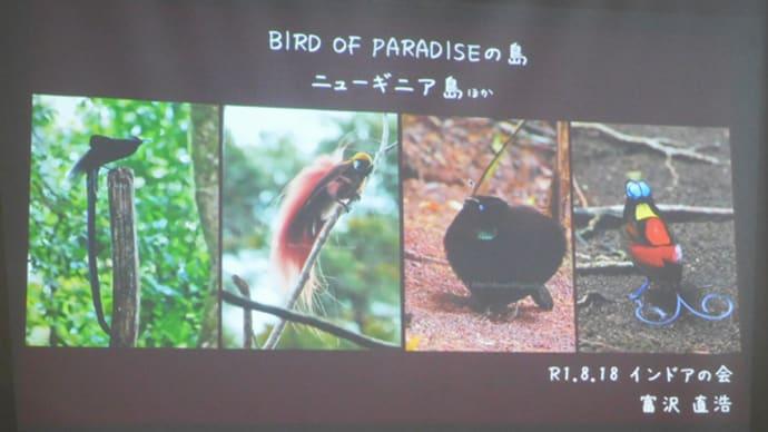 インドアの会は、ニューギニアの鳥。(8/18*日)