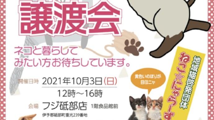 2021年10月3日(日曜日)猫の譲渡会 フジ砥部店にて開催いたします!
