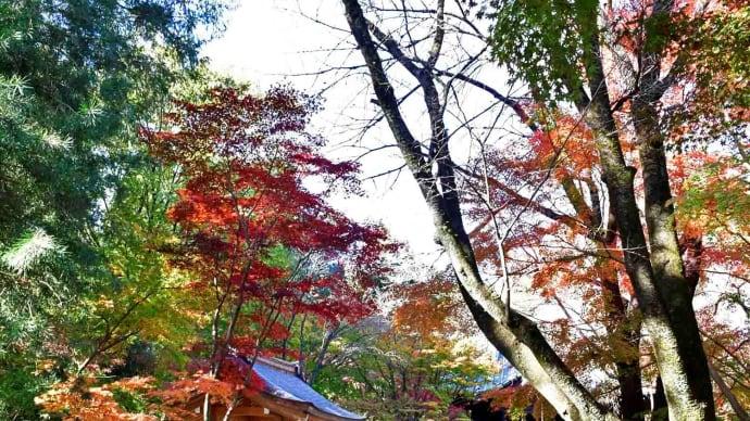 平林寺の紅葉 No4