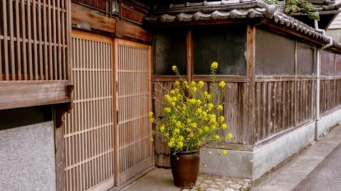 玄関に菜の花