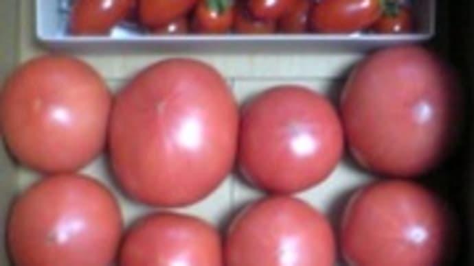 トマトプレが届きました♪
