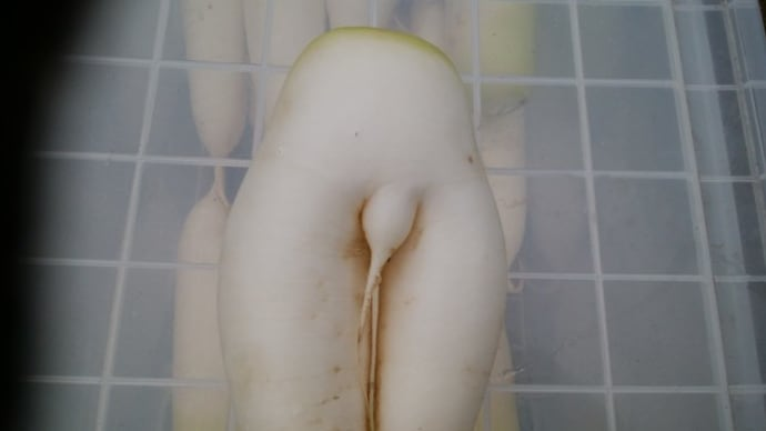 チン野菜。