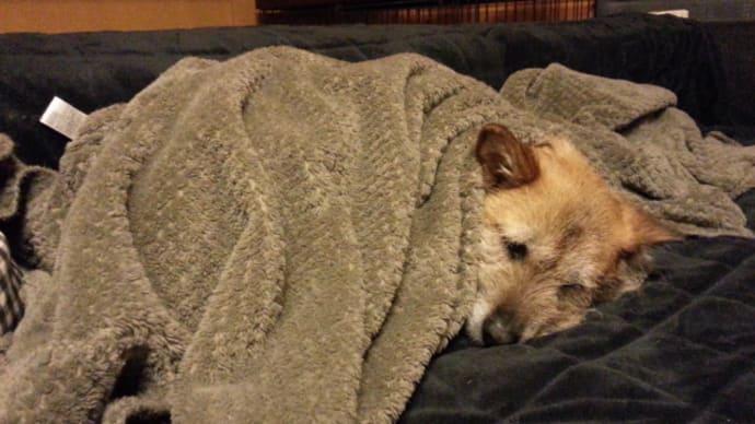 三夜連続、毛布ユノ