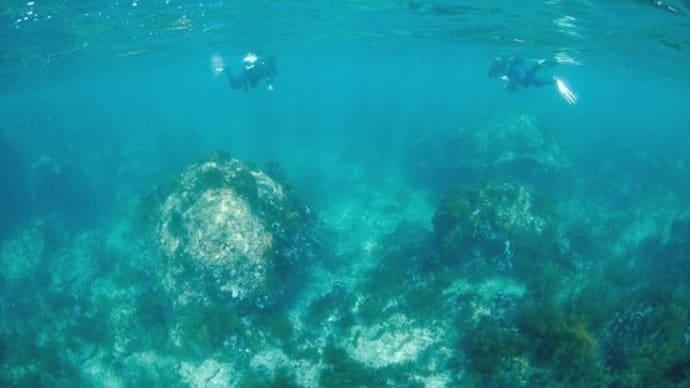 今日の香住は青い海にイカ祭り