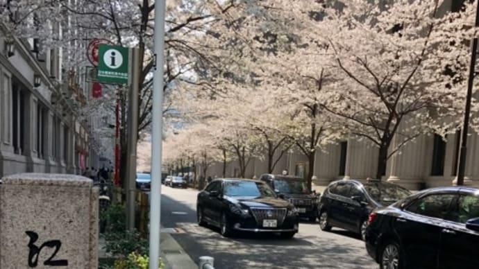 江戸のサクラ咲く。