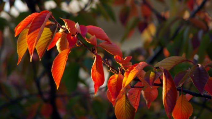 秋が深まり 、大阪も落葉し始めました