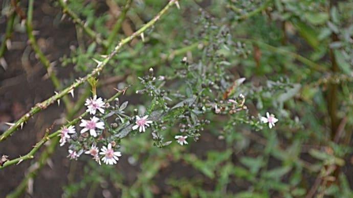 細々と咲く花