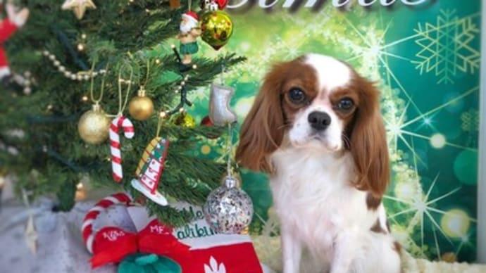 MERRY CHRISTMAS★  犬のしつけ教室@アロハドギー
