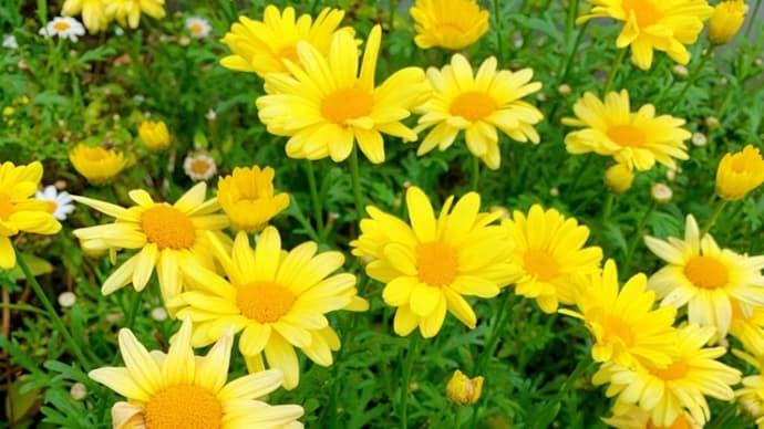 花に癒される毎日