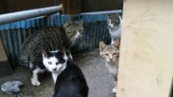 見返り猫家族