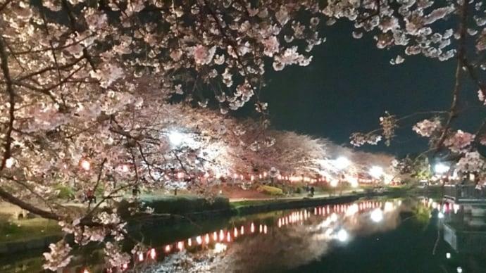 ひとり夜桜