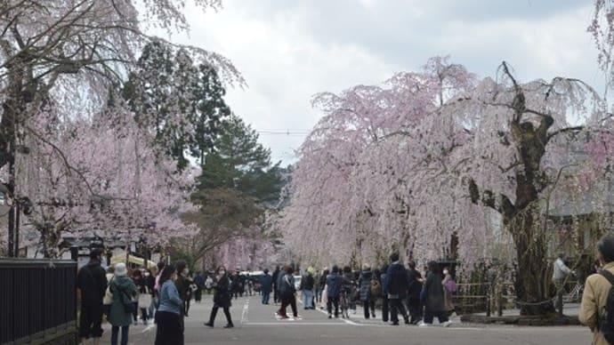 みちのくの小京都角館の桜(2)