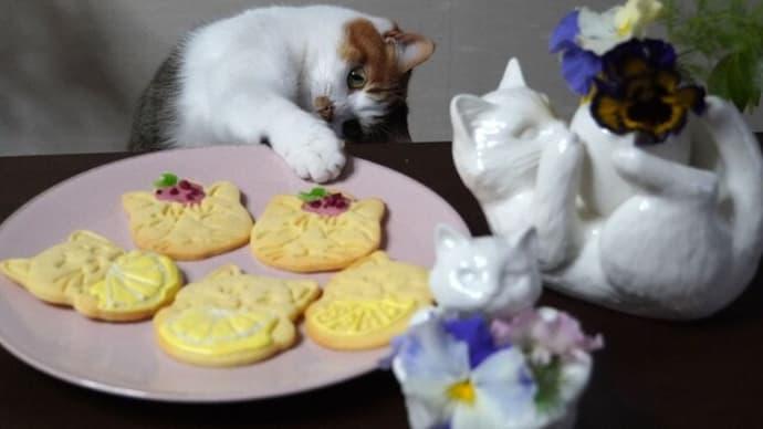クッキーと猫とあくび