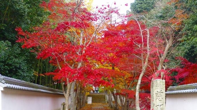 三木市 慈眼寺の紅葉