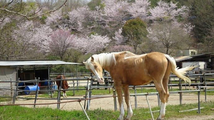 4月初めの愛知県緑化センター