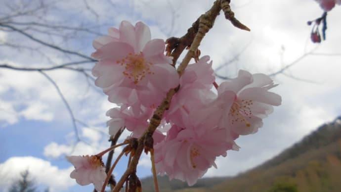春のハーブ園の花々とアロマグッズ。